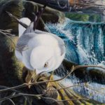 "NEAR FISHERMAN'S PORTAGE - Ring-billed Gull acrylic on panel 10"" x 15"" (25cm x 38cm)"