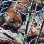 "MIDDAY SUN - Pine Marten acrylic on panel 15"" x 24"" (38cm x 61cm)"